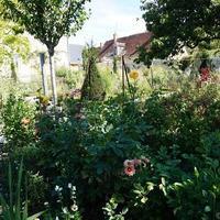 薔薇の街シェディニー村 キュレ庭園 Jardin de Curée