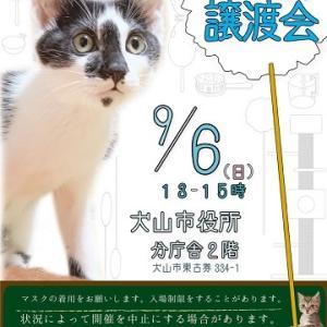 9月6日(日)譲渡会、参加猫ご紹介。