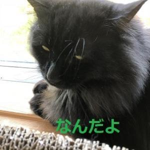 長九郎さんからのお礼。