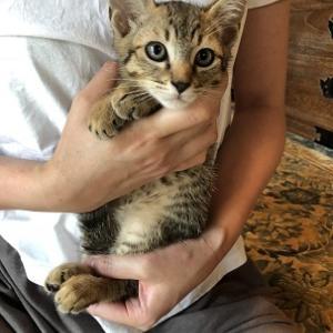 またまたまた新猫さんご紹介。