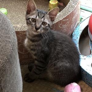 新しい子猫さんのご紹介と・・・。