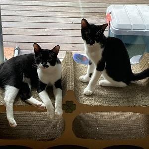 10月3日(日)譲渡会参加猫ご紹介。