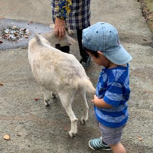 ヤギに触り放題なだけじゃなくヤギチーズもホエーも美味しい! 水戸市森林公園【ヤギ&施設編】