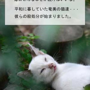 猫3000頭を殺処分!?奄美大島の野良猫管理計画・動物愛護団体が猛反発