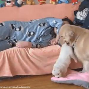 【ほのぼの】飼い主の隣でどうしても寝たい大きな犬。でも邪魔者が・・・彼が取った行動は!?