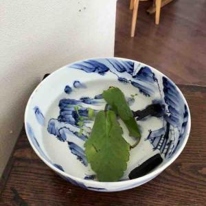 竹炭を植物に・・・。