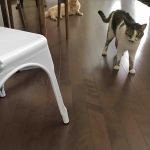 夏の大掃除~猫を洗う~