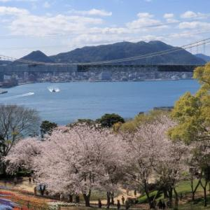 2020桜: 火の山の桜と関門橋