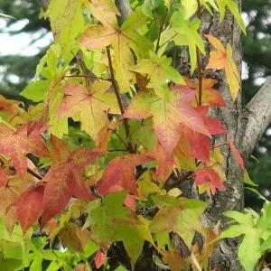秋の気配と夏の名残