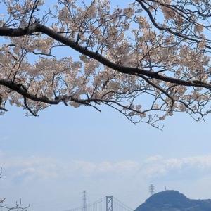 2019桜: 港がみえる丘の径