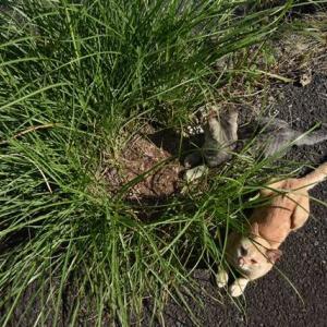 不思議な猫スポット