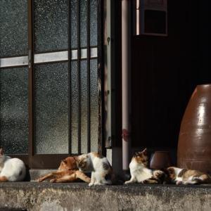 壺のある猫景