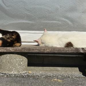 猫専日向ぼっこ台