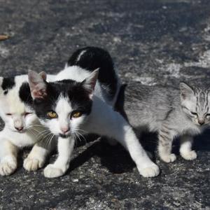 これが猫保育園