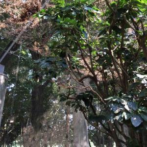 麻溝公園の冬を越す文鳥たち