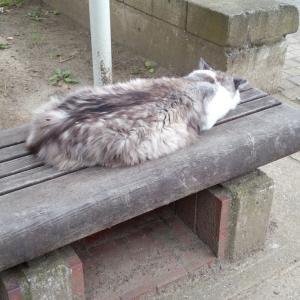 長毛 捨て猫