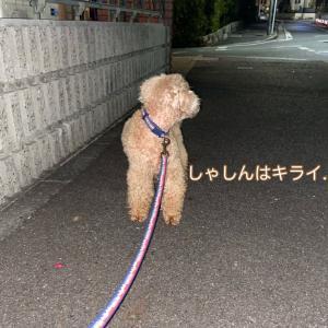 夜散歩はiphoneで写るかな