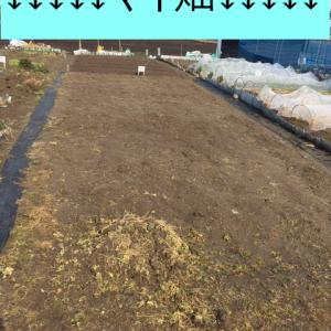【家庭菜園】市民農園が当たった!広い畑が利用できる~!!