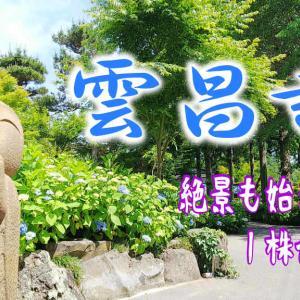 【雲昌寺】紫陽花シーズン到来!一度は見たい絶景ポイント 男鹿市北浦