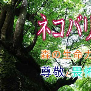 【ネコバリ岩】清流に佇む森の巨人の下で 五城目町馬場目