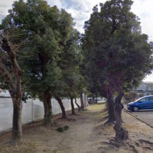 神社参道の木々が全て伐り倒されてしまった。