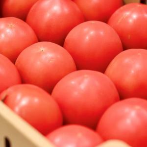 『岐阜県産夏秋トマト』をいただきましたっ