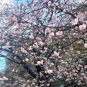 春!インテリア変身中。