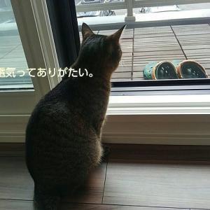 当たり前ではない「便利さ」。北海道胆振東部地震を振り返る