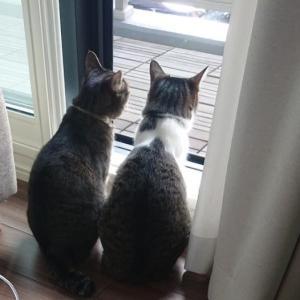 猫ピンチ!マンションの消防点検2