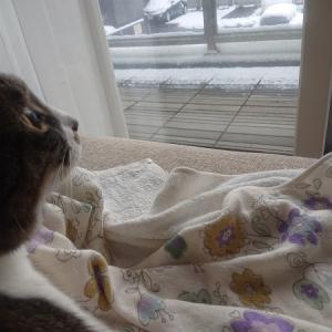 猫も2歳を超えるとこう変わる!これまでの成長まとめ