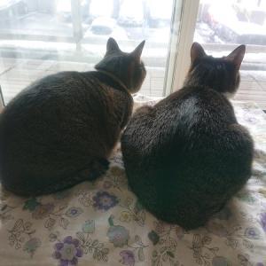 いつか来るそのときのために。【保護猫・外猫関連ブログ紹介】
