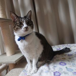 2020年2月22日は猫の日。おうちで楽しめるイベントは何?
