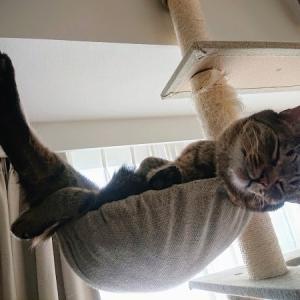 zoomでのオンラインヨガ初体験は、猫とわちゃわちゃして終わった