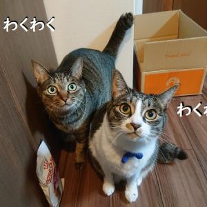 キャットフードのトッピングを変えたら、猫の機嫌が良くなった