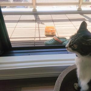 ささやかなベランダガーデンへの夢。【猫が好きなハーブ】
