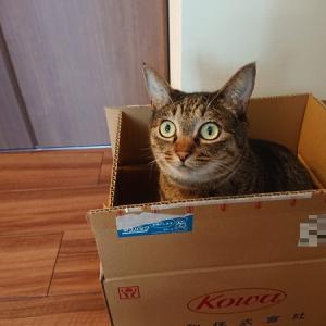 猫はキャットミントがお好き?