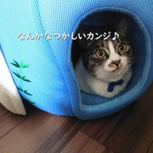 猫用クールベッドの使い方が、納得できない。