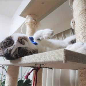 【ヒマだニャー!】結局猫は「走る」ことが何にも勝るストレス解消なのか