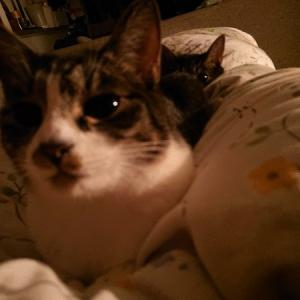 猫の黒目コレクション(深夜バージョン)
