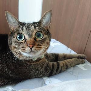 猫の寝相がNクールの柄そっくりだった。【夏仕様】