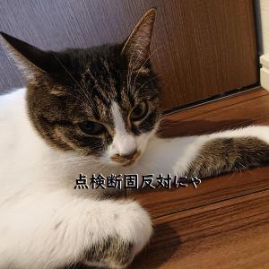 猫がいる家の定期点検、うっかりポイントに気を付けて(>_<)