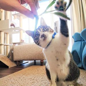 気がかりな迷い猫と、エノコロ草で狂喜乱舞のにゃんず