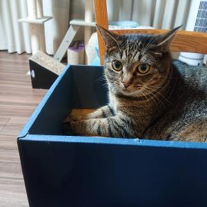 ネコハラ対策の、応用。【膝のり猫レッスン】