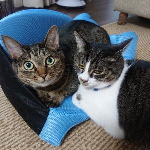 猫がコソコソしてるときって、何かアヤシイ。