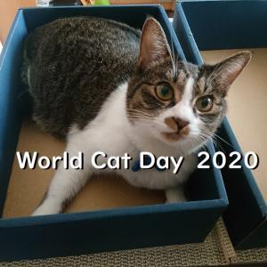 8月8日、世の中の猫さんに思いを馳せる。【世界猫の日2020】