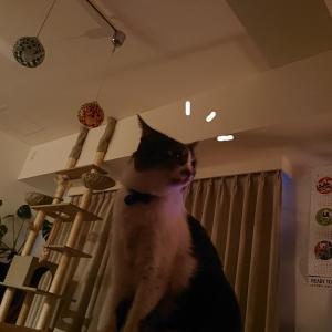 ウチ猫、初めて飛ぶ虫に遭遇。