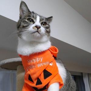 猫とハロウィンを楽しみたい。