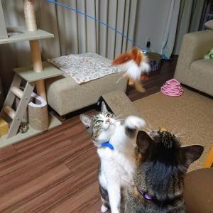 ダイソーで猫じゃらしを2つ新調。姉妹それぞれの遊び方