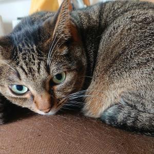 猫の「遊びたい」サインを見逃すな