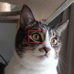 「猫瞳AF」だと?カメラ初心者のミラーレス一眼レフ探し②新イラストも